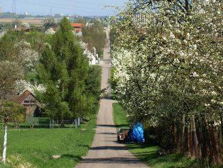 Blick von kallenberg auf die Solitudealle Richtung Stuttgart-Stammheim
