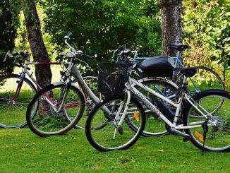 Fahrräder unter Bäumen