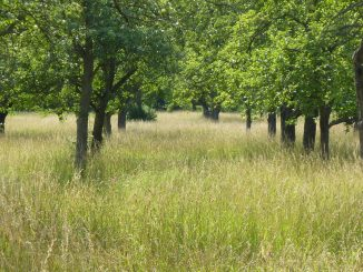 Baumwiese Egerten